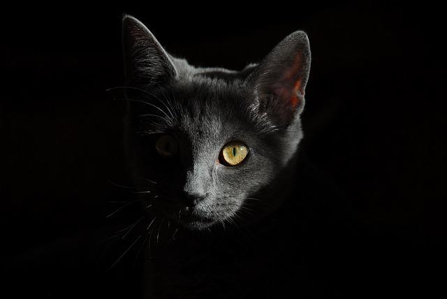 猫の目・視線